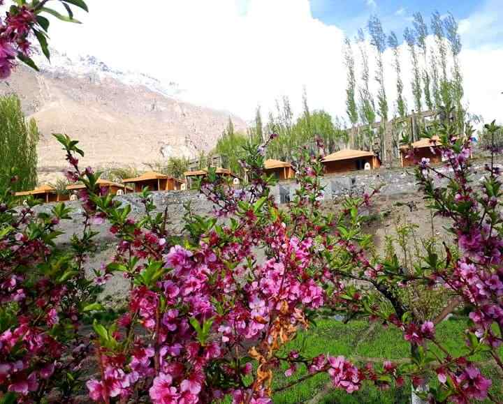 Traveling to Hunza in Peak Blossom