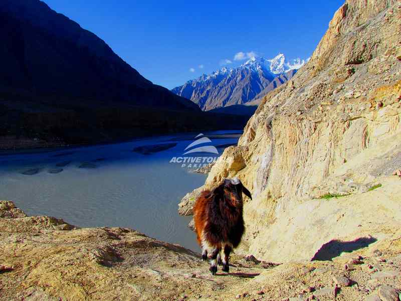Hunza Blossom Tour Packages