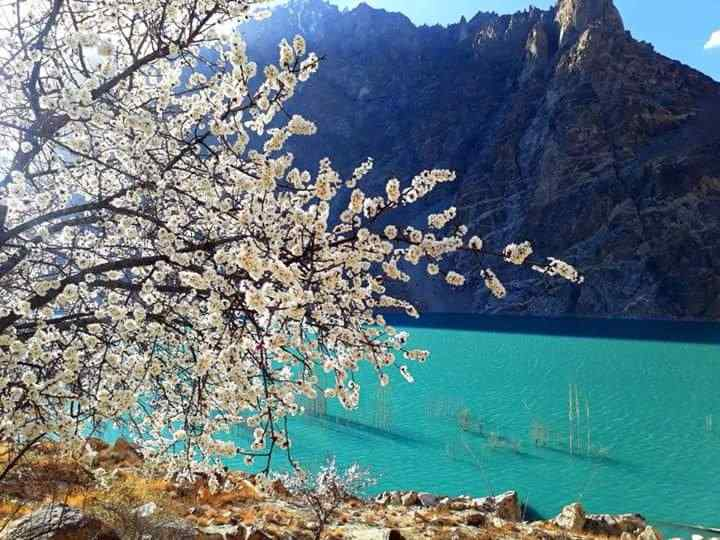 Hunza Valley Tour in Spring Blossom
